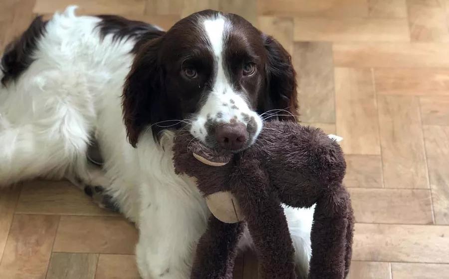 buddy-with-a-monkey